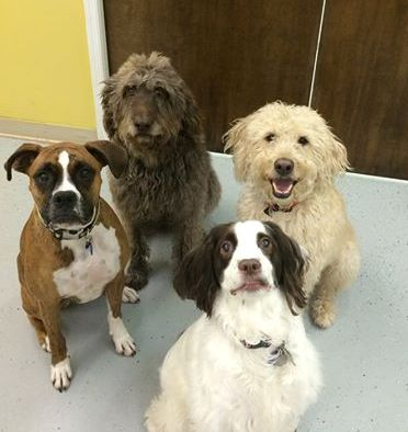 Pets love the care they get at Let's Go! Pet Care