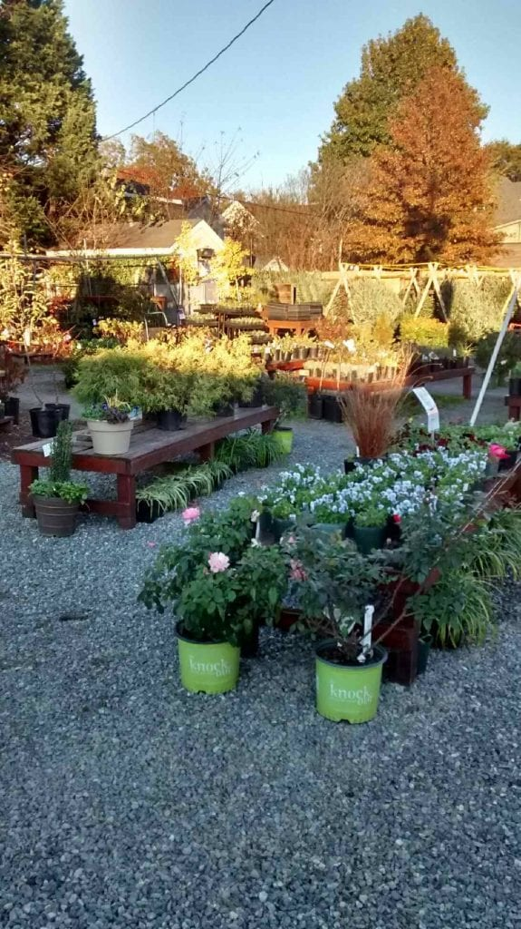 Holiday Trees and Wreaths At The Garden Center